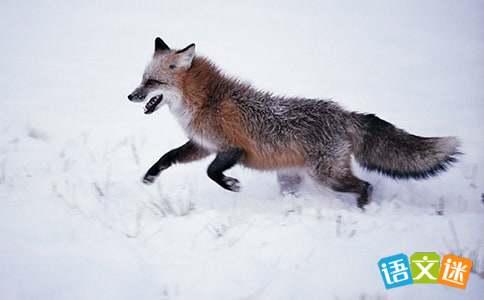 狐狸的歇后语