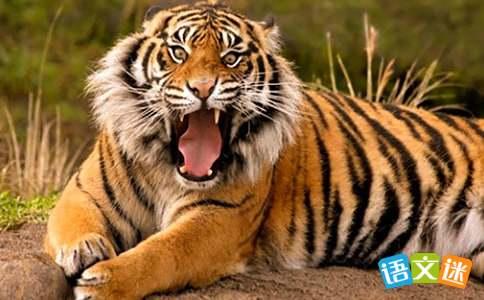 老虎挂念珠歇后语及答案