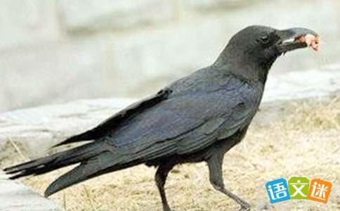 关于乌鸦的`有趣歇后语大全