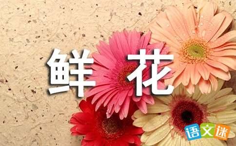 各种鲜花的比喻句-轻博客
