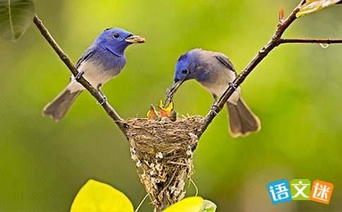 描写小鸟声音的优美句子