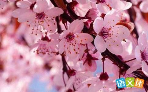 描写樱花的现代诗