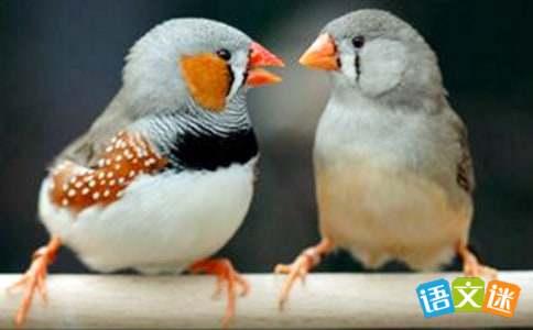 珍珠鸟教学反思4篇