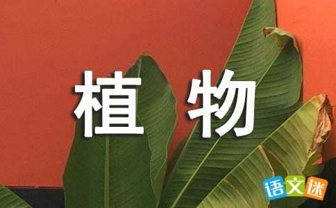 植物的谜语关于植物的谜语大全