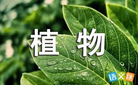 关于植物的比喻句